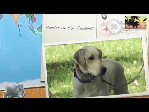 Aldens Kennels Pet Fitness Programs, Illinois