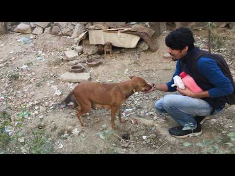 What Street Dogs can do to you! | Wildly Indian