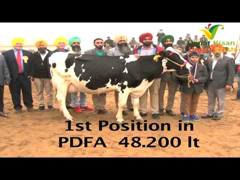 ASIAN RECORD HOLDER DAIRY FARM