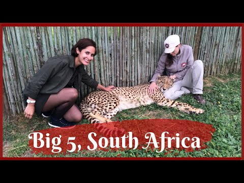 Travel Vlog: My safari experience - Part 2