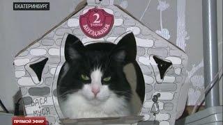 Екатеринбуржцы организуют фотосессии для бездомных кошек