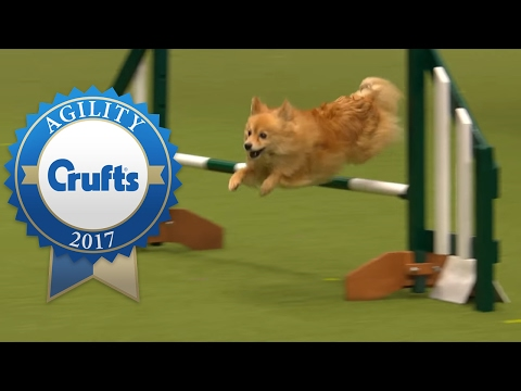 Agility - Small Team Final - Part 3/3 | Crufts 2017