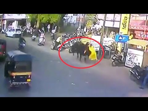 Terrifying moment: A bull throws woman several meters into air
