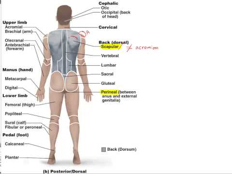 Chapter 1E Anatomical Terminology