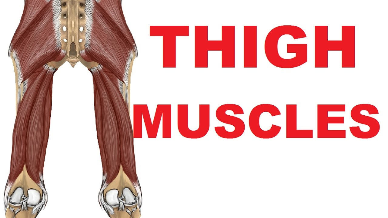Thigh Muscles - Posterior Compartment and Sciatic Nerve - YouTube