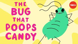 The bug that poops candy  George Zaidan