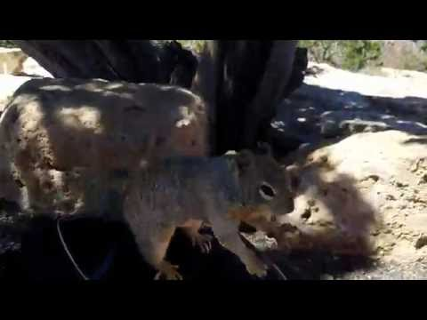 Squirrel from Grand Canyon