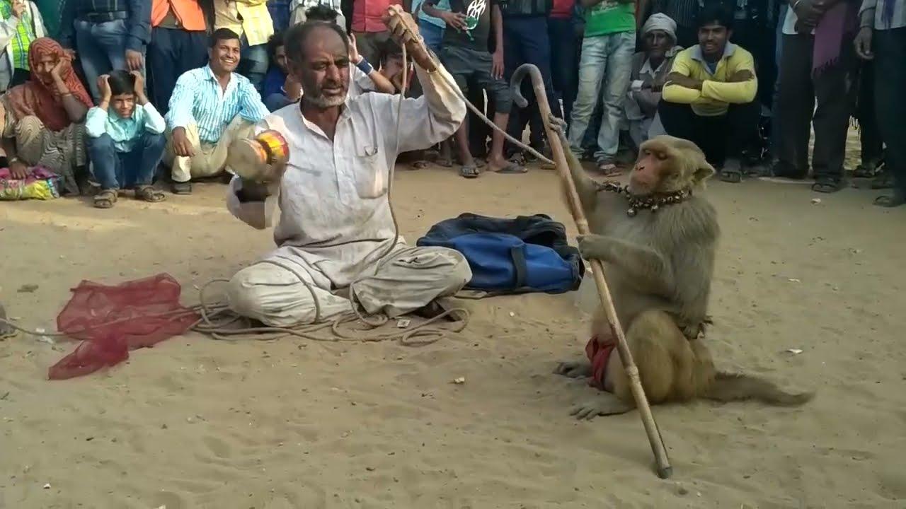 बंदर की कॉमेडी,हंस हंस कर हो जाओगे लोटपोट,Bandar aur