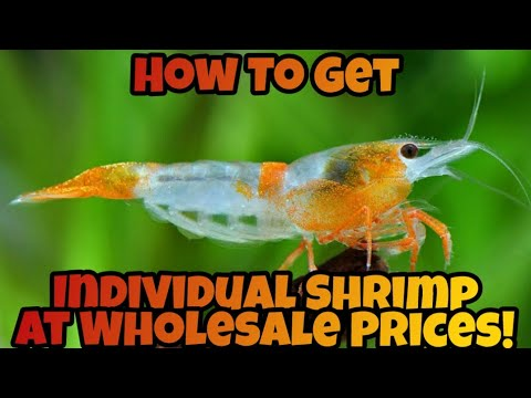 Where to buy aquarium shrimp near me
