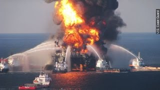 Deepwater And Dolphins: The Oil Spill