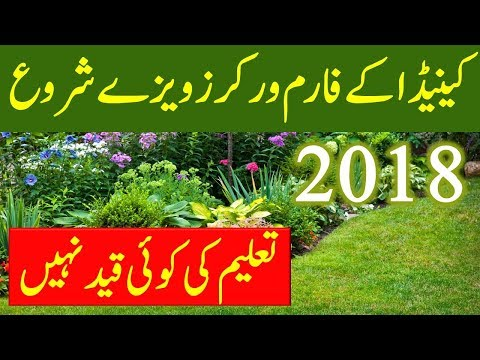 Canada Fruit picker and farm worker visa. Canada immigration Latest News 2018.