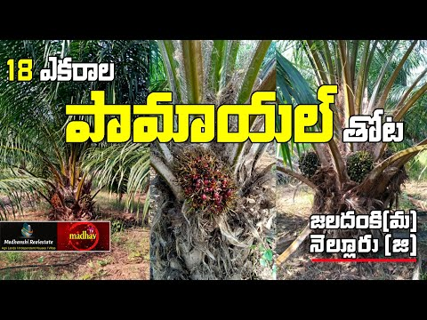 18 Acres || Land for sale || Palm oil Farm Land || Nellore District || 7386888988 || #MadhavTv