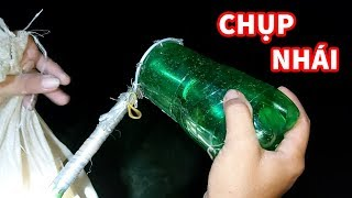 Cách Bắt Nhái Đồng Đơn Giản Nhất Bằng Chai Coca