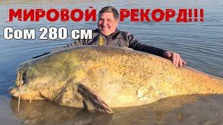 Самый большой сом в мире Рекордный сом 280 см и около 140 килограмм