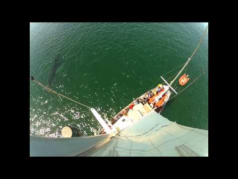 mother calf humpback video from the top of mast.mp4