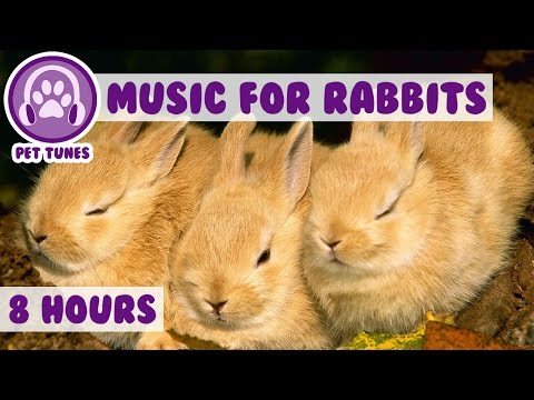 Over 8 HOURS of Relaxing Music for Rabbits! Natural Stress and Anxiety Relief for Rabbits!