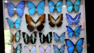 Парк Бабочек. Тайланд(Если у вас нет арахнофобии или боязни насекомых - обязательно посетите Парк Бабочек на Пхукете. На входе..., 2014-08-28T21:22:12.000Z)