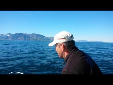 Horgásztúra a Norvég fjordokba a sarkkörön túl 2016
