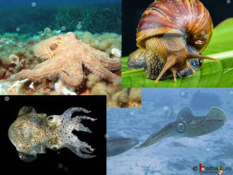 Biology - Classification - why and how - Diversity in Living Organisms - Part 1 - English