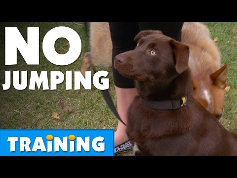How To Stop Your Dog From Jumping | Bondi Vet