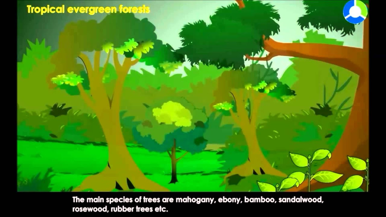 hight resolution of diagram of the temperate forest
