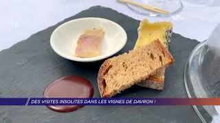 Yvelines | Des visites insolites dans les Vignes de Davron!