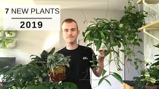 7 New and Upcoming Houseplants for 2019