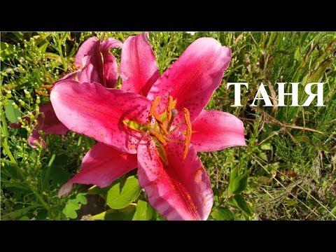 Таня, Танечка, Танюша! С Днём Татьяны!