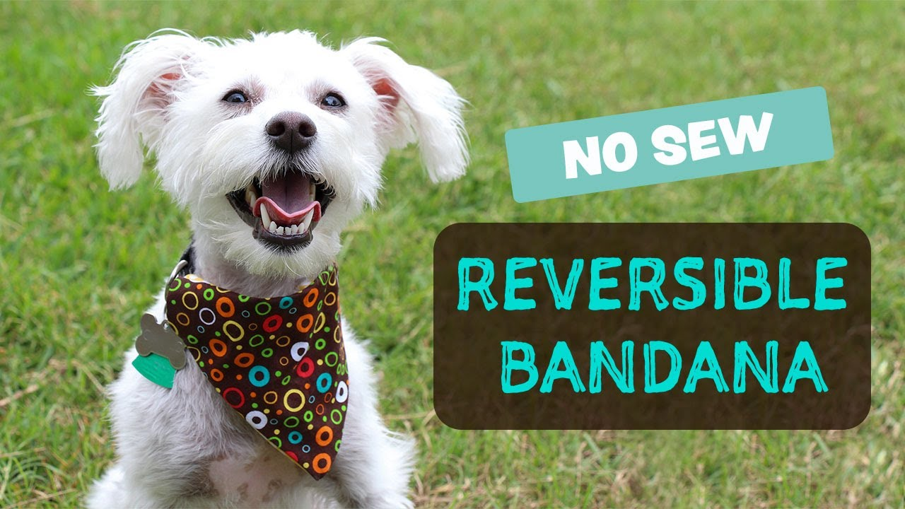 How To Make A Bandana For Your Dog