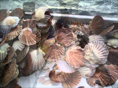 Bass Strait Scallops