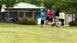 Dog Training, Bentley, Morkie, Day 10 5K, Baseball, Soccer Distractions - Dog Trainer
