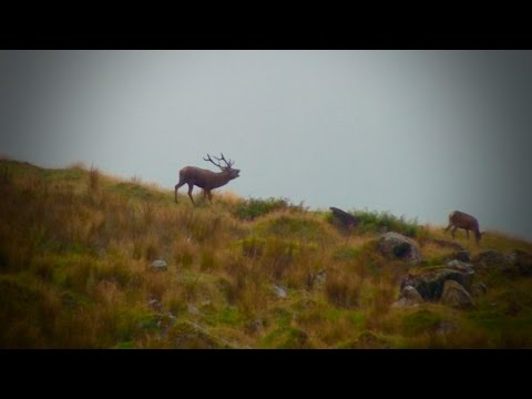 Hunting Rusa Deer in New Caledonia part 57