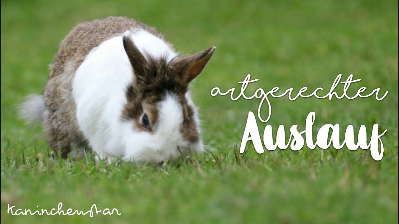 15+ Unser artgerechter AUSLAUF & so bekommen wir sie wieder in den Stall    Kaninchenstar Fotografie