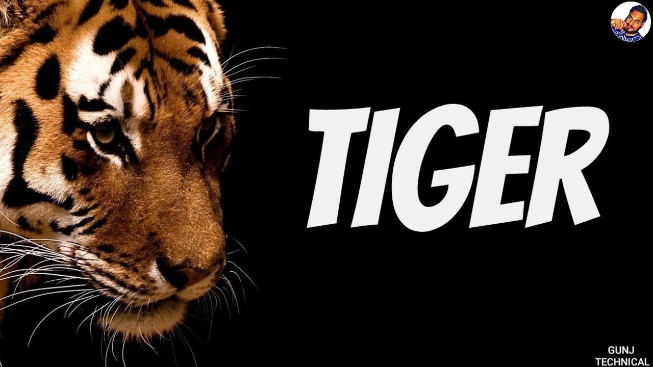 tigress in hindi