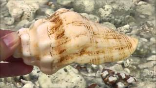 видео Ракушки Черного моря