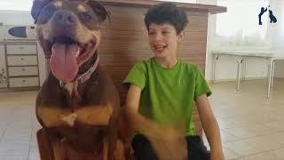 ילדים מדברים כלבים - הלחתה