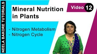 Mineral Nutrition in Plants - Nitrogen Metabolism - Nitrogen Cycle