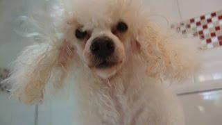Juju gosta de tomar banho!