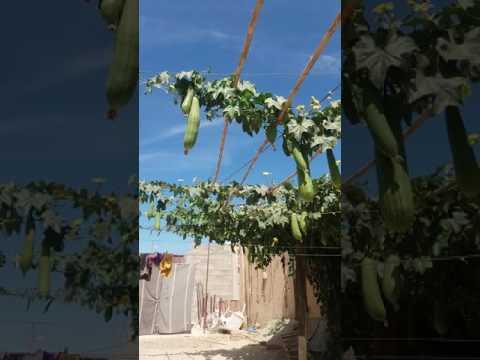 mon jardin de maison 2