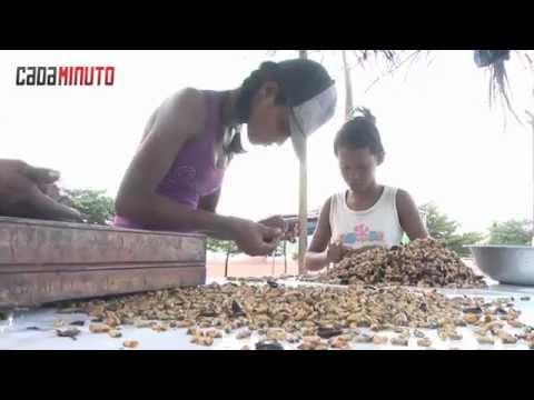 Produção de sururu cai e afeta renda de pescadores