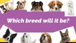 Which DOG BREED fits you best - TEST