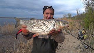 Ловля Белого Хищника Весной Рыбалка на Волге Рыбалка на Донку Закидушки Рыбалка 2021