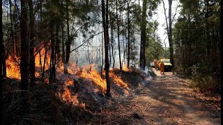 Fire Emergency Declared In NSW And Qld