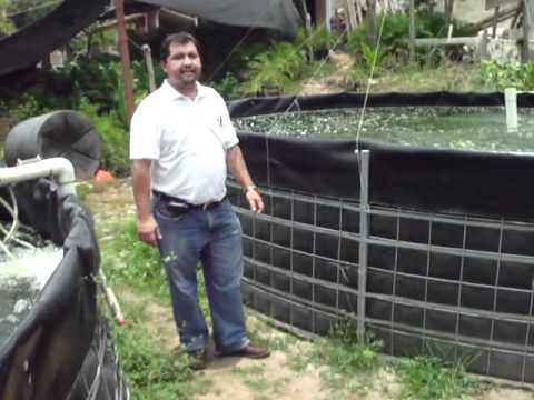 Estanques de geomembrana para la captacion de agua de for Construccion de estanques para tilapia