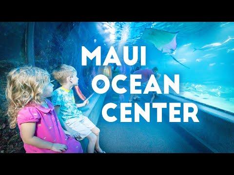 MAUI OCEAN CENTER AQUARIUM   Maui Episode 3