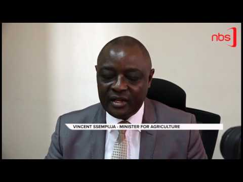 Museveni Orders Protection of Vanilla Gardens