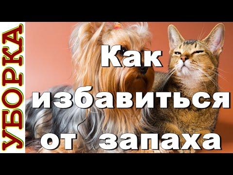 Как избавиться от неприятного запаха от кошек и собак