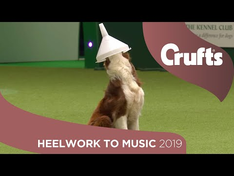 Freestyle International Heelwork to Music - Part 1 | Crufts 2019