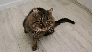 крупный,мордатый кот,делали 2 рентгена,которые показали вывих бедра,дезориентирован,повреждение мозг