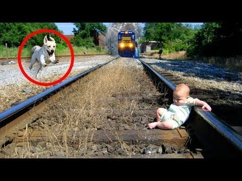 הכלב שלי הציל לי את החיים !!!!!!